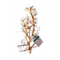 Tantora korzeń Branch wood - S (20-30cm)