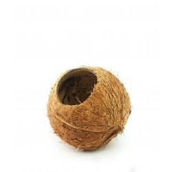 Kokos - 1szt