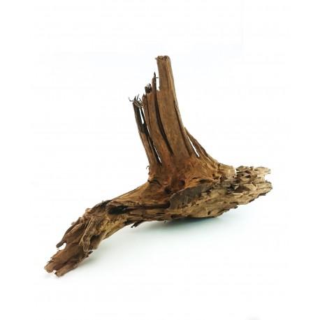 Korzeń Mangrowca 40-60cm - 1szt