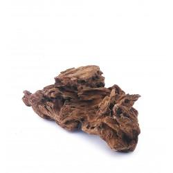 Korzeń Mangrowca S 19-23cm - 1szt