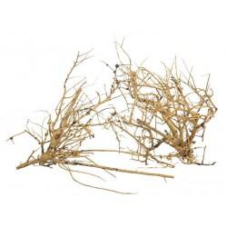 Korzeń Branch Wood - 100g