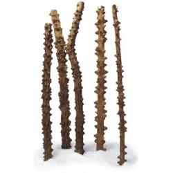 Korzeń Point Wood - 1kg