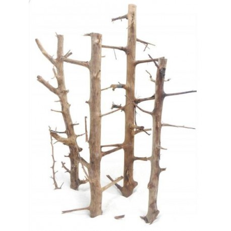 Korzeń Tree Wood - 1kg