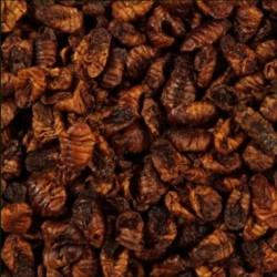 Glopex Larwy Jedwabnika - uzupełnienie 150g