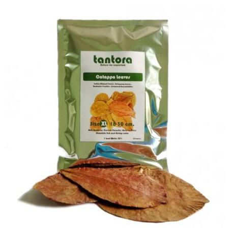 Tantora Cattapa Leaves liście Ketapangu NANO S - 15szt