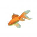 Dla Złotych rybek