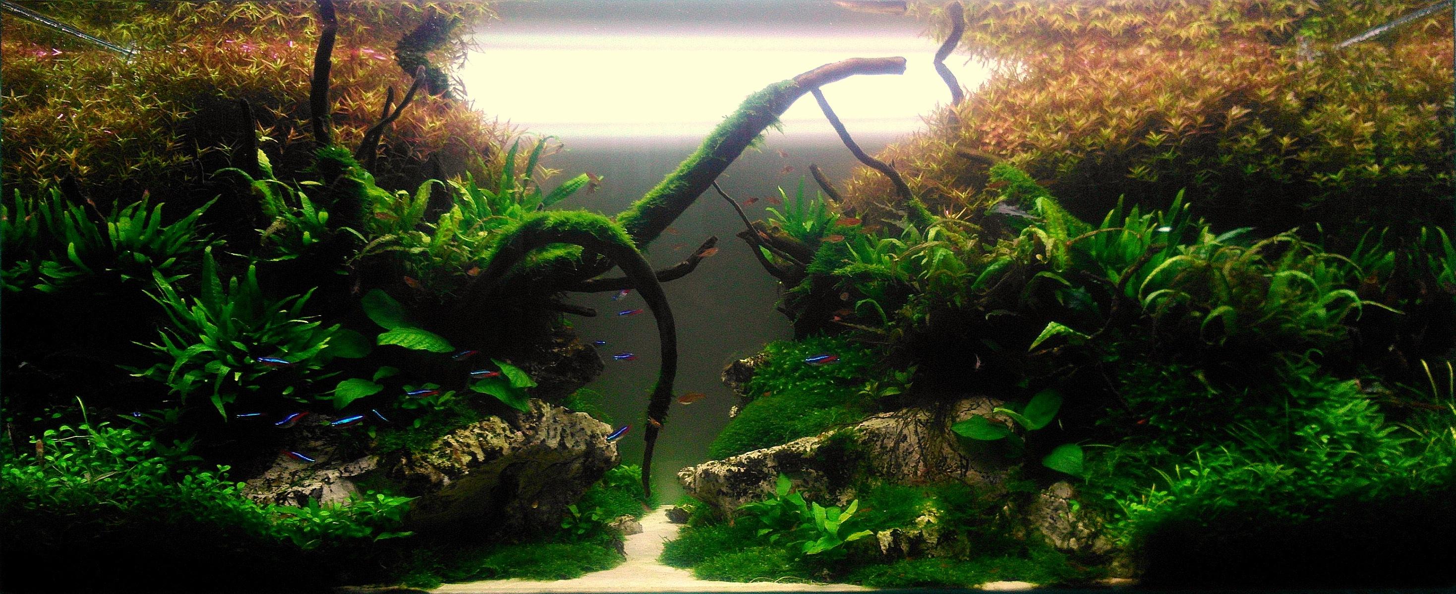 Akwarium Nature